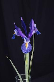 Belle fleur bleue fraîche en rosée dans un vase