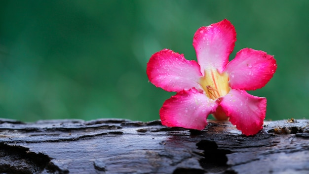 La belle fleur sur bois nature papier peint
