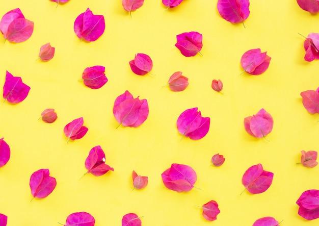 Belle fleur de bougainvillier rouge sur fond jaune.
