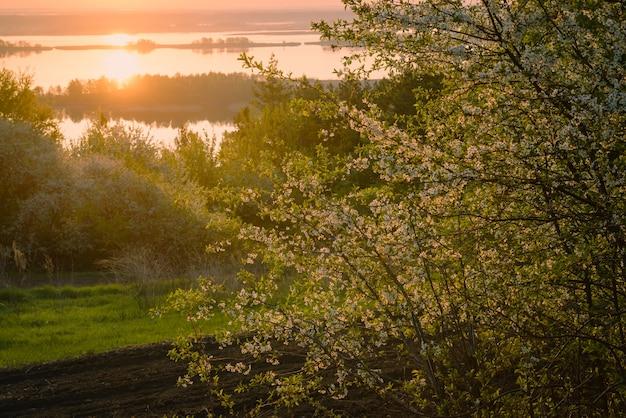 Belle fleur de cerisier dans le jardin au lever du soleil avec les premiers rayons du soleil en contre-jour et la rivière en arrière-plan. fée coeur de la nature