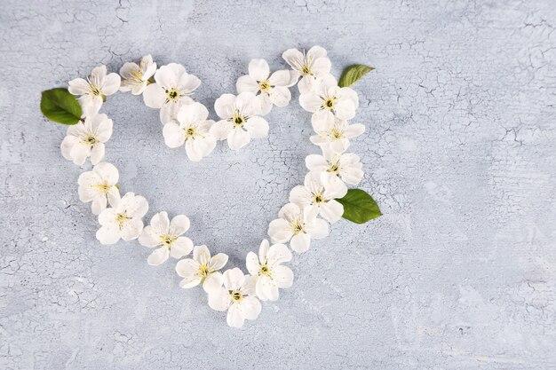 Belle fleur de cerisier sur fond de bois
