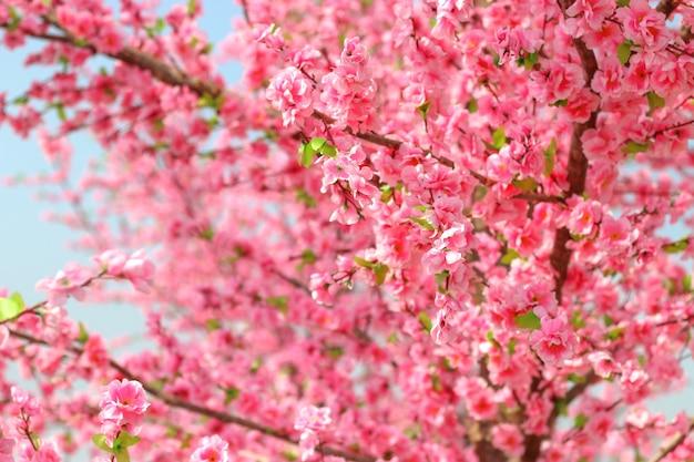 Belle fleur de cerisier sakura avec un ciel bleu