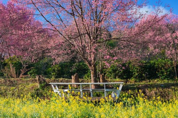 Belle fleur de colza et de cerisier jaune