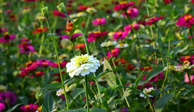 Belle fleur dans l'arrière-cour est rafraîchissante