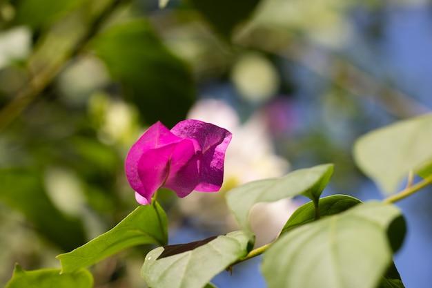 Belle fleur dans la nature