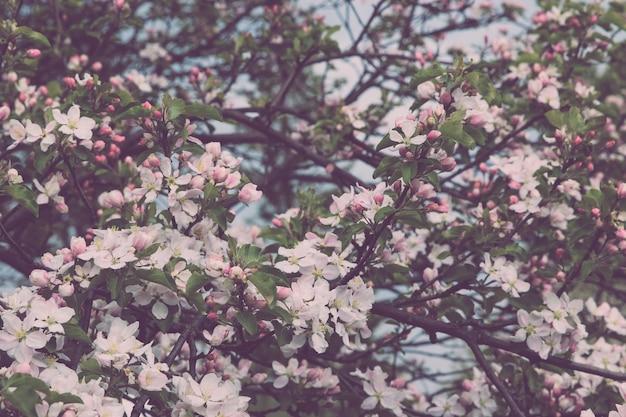 Belle fleur épanouie dans le jardin, fond d'été. fleur magique de photographie sur fond flou