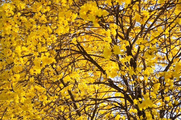 Belle fleur de fleur d'été jaune, stock photo