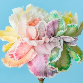 Belle fleur fleurie macro
