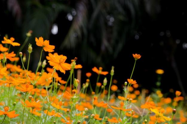 Belle fleur, fond d'été naturel