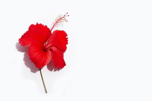 Belle fleur d'hibiscus rouge en pleine floraison sur blanc.