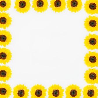 Belle fleur jaune formant cadre blanc