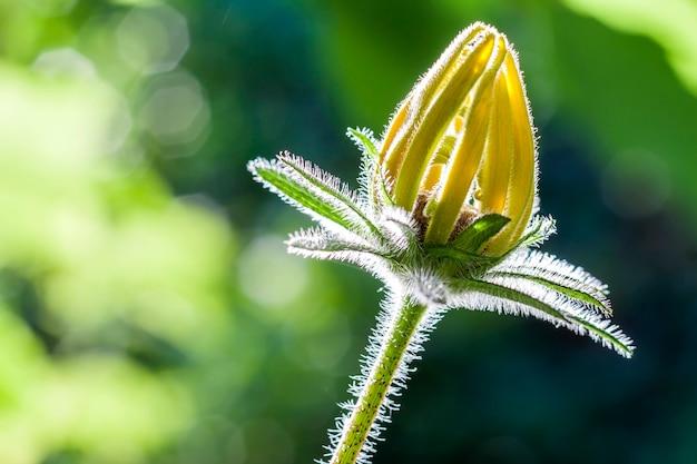 Belle fleur jaune à la lumière du soleil sur un arrière-plan flou vert