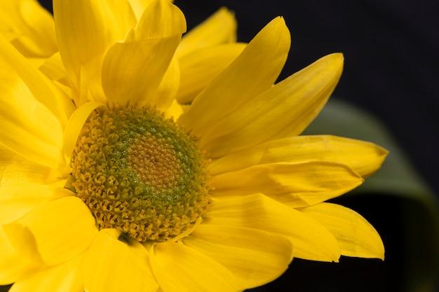 Belle fleur jaune macro
