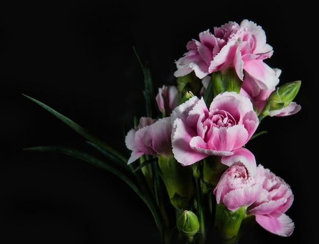 Belle fleur d'oeillets en fleurs sur un fond noir
