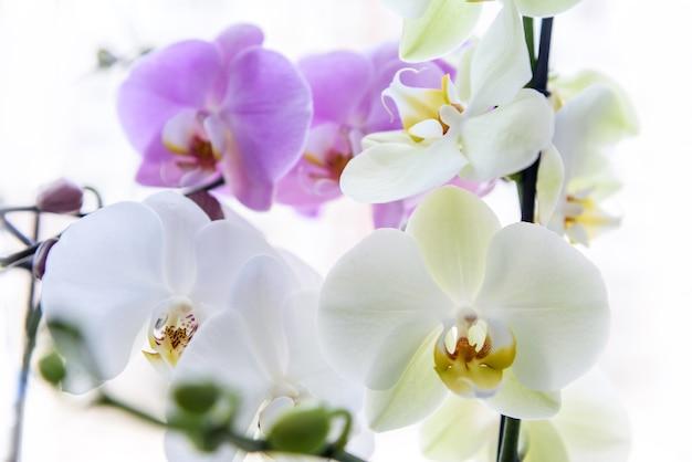 Belle fleur d'orchidée sur brunch vert se bouchent