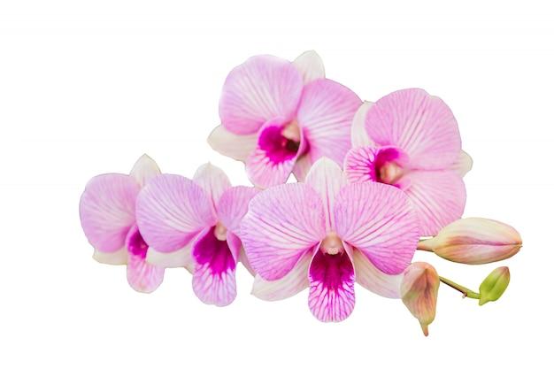 Belle fleur d'orchidée sur fond blanc