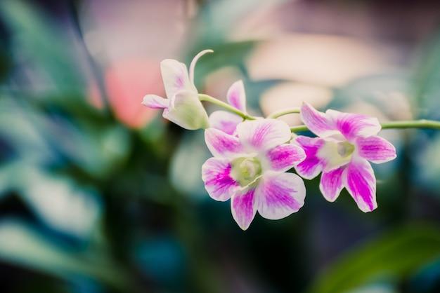 Belle fleur d'orchidée rose qui fleurit dans le jardin. fleur naturelle