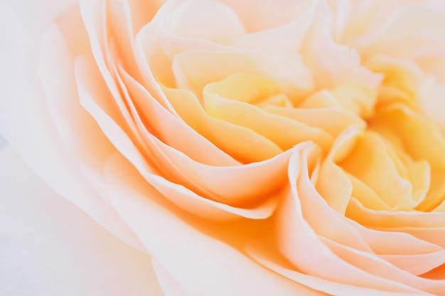 Belle fleur rose bouchent abstrait