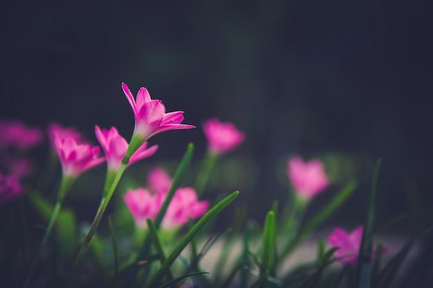 Belle fleur rose dans le jardin.