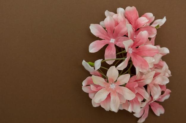 Belle fleur rose isolée sur fond marron avec espace de copie. concept de printemps ou de pâques.