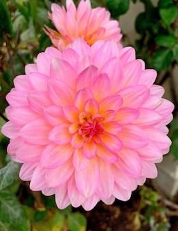 Belle fleur rose poussant dans un champ