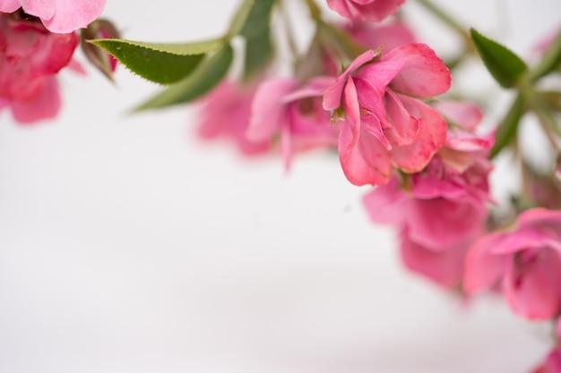 Belle fleur rose rose, fond floral