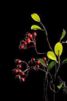 Belle fleur rouge ou branche avec des baies rouges isolé sur fond noir gros plan et orientation verticale
