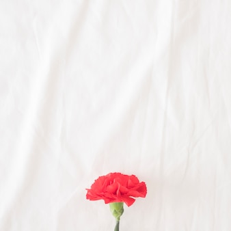 Belle fleur rouge sur tige verte
