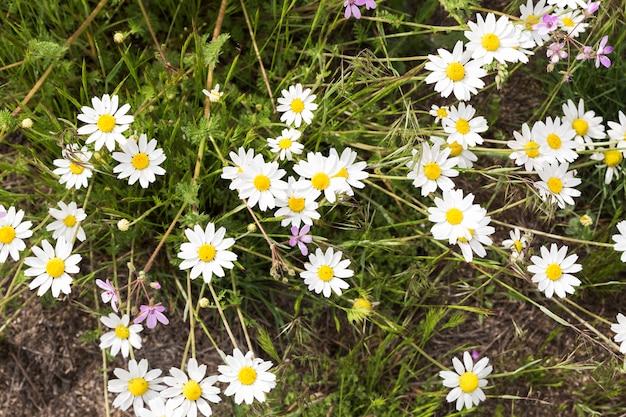 Belle fleur sauvage de couleur blanche