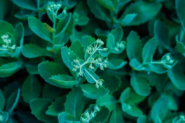Belle fleur verte qui pousse dans le jardin