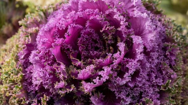 Belle fleur violette abstraite