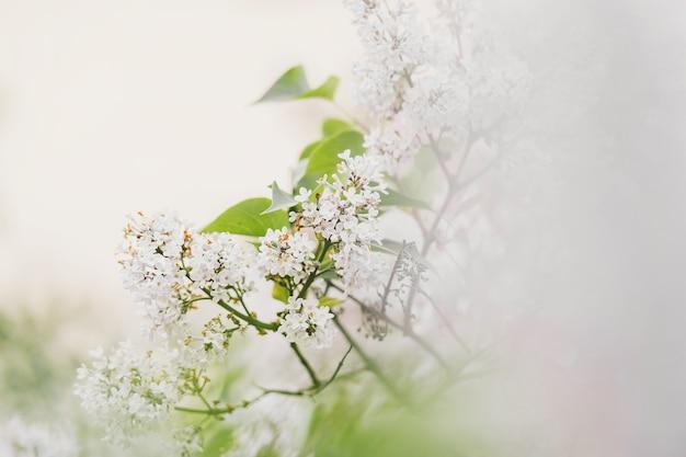 Belle floraison. fond avec des fleurs un jour de printemps.