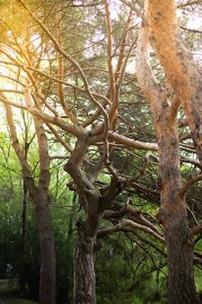 Belle forêt au printemps avec un soleil éclatant qui brille à travers les arbres