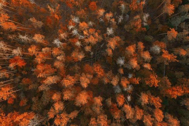 Belle forêt d'automne colorée avec des arbres tombés et des bûches au coucher du soleil. vue aérienne.