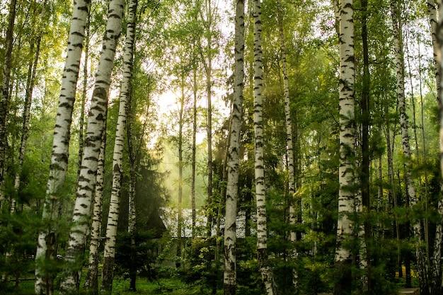 Belle forêt d'automne dans la brume.
