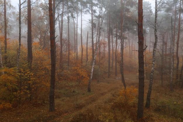 Belle forêt d'automne mixte brumeux tôt le matin