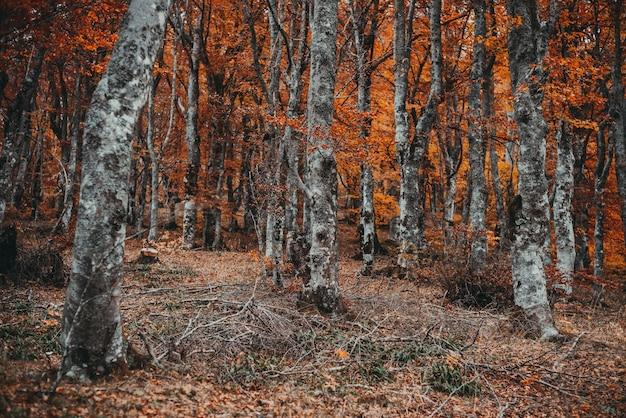 Belle forêt d'automne