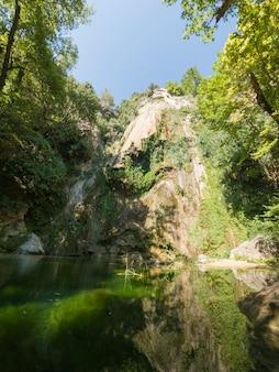 Belle forêt dans la nature