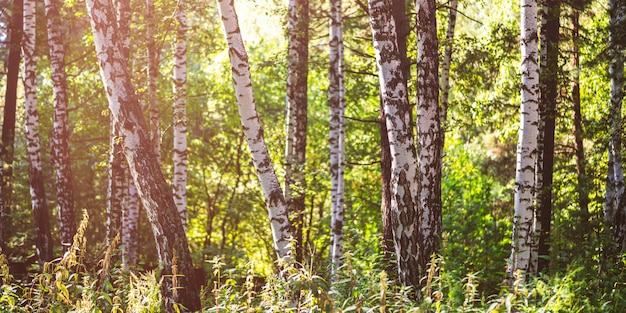Belle forêt d'été avec différents arbres