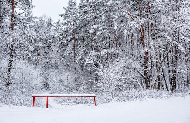Belle forêt d'hiver avec des arbres enneigés beaucoup de brindilles minces couvertes de neige blanche