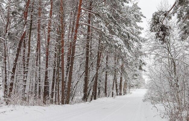 Belle forêt d'hiver avec des arbres enneigés et un conte de fées de route blanche