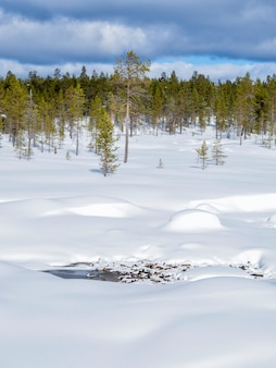 Une belle forêt d'hiver recouverte de neige en finlande
