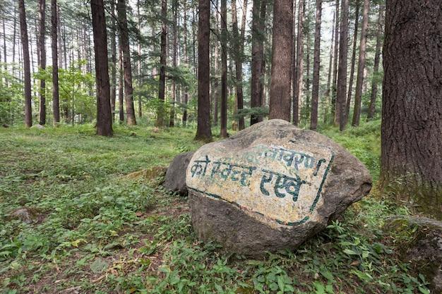 Belle forêt, manali