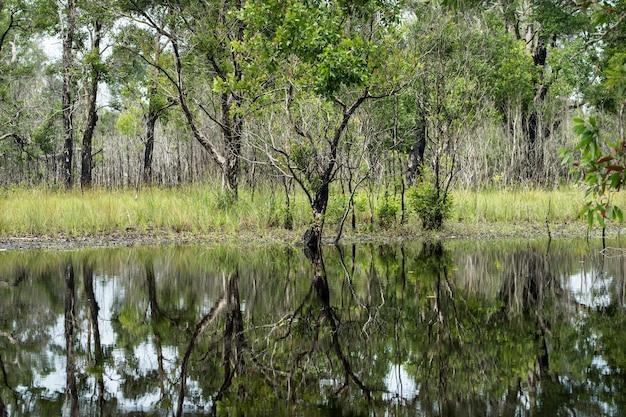 Belle forêt de nage avec des reflets