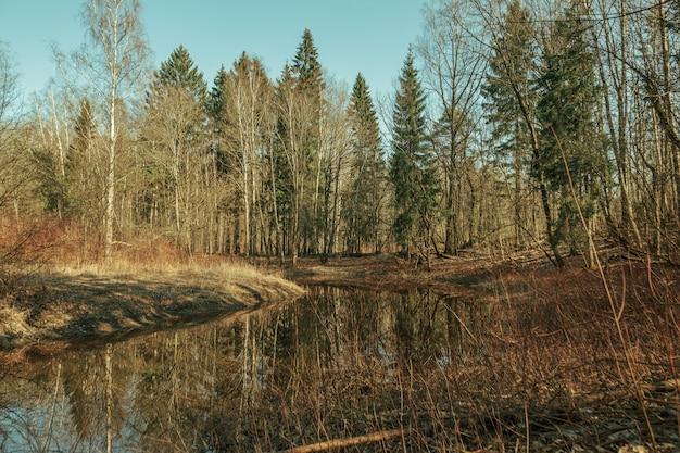 Belle forêt de pins le matin à l'automne