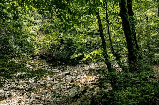 Belle forêt tropicale avec arbres et rochers