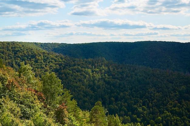 Belle forêt verte contre le ciel bleu avec des nuages. parc naturel.