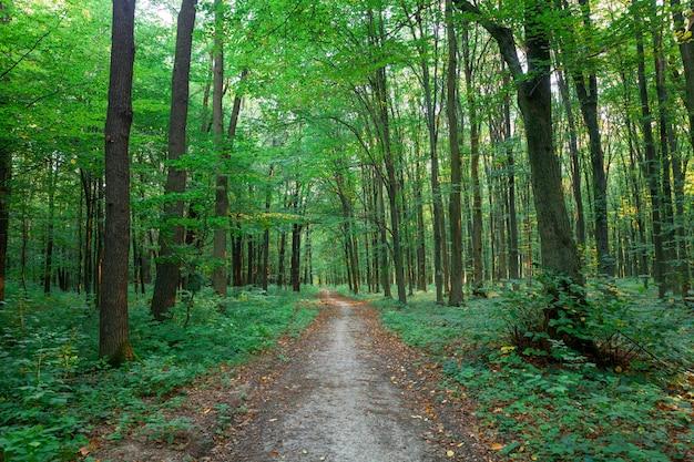 Belle forêt verte en été