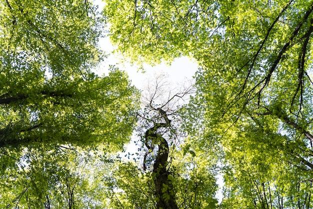 Belle forêt verte naturelle