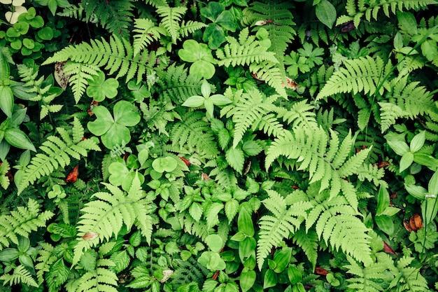 Belle fougère verte autruche feuilles feuillage et différentes feuilles vertes